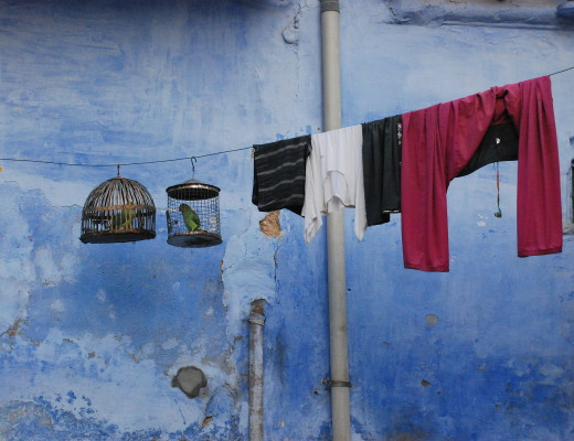 Birds hanging from a clothesline. Why not?