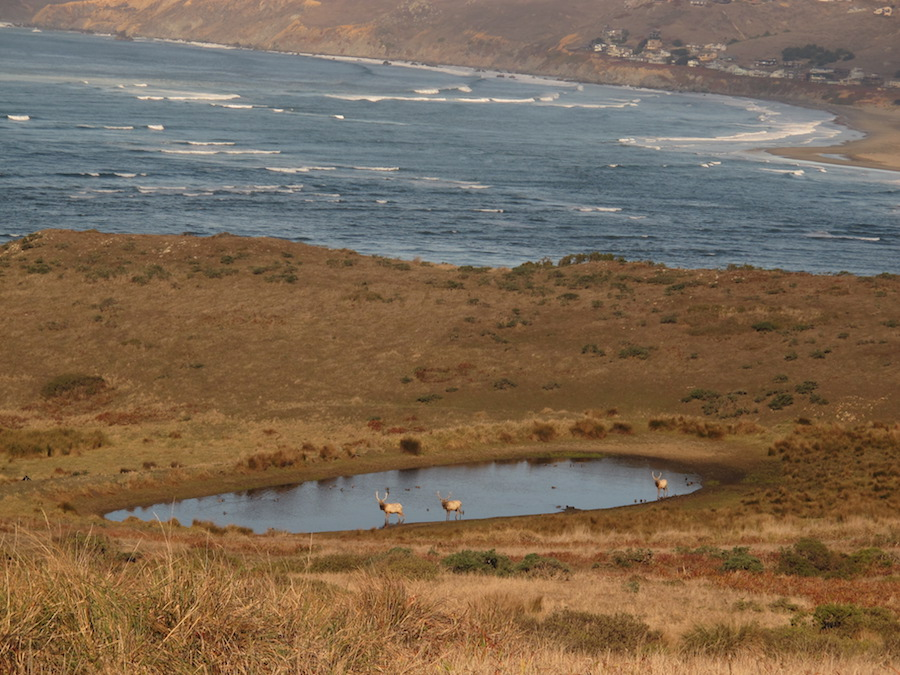 View from Pierce Point trail - Hour One