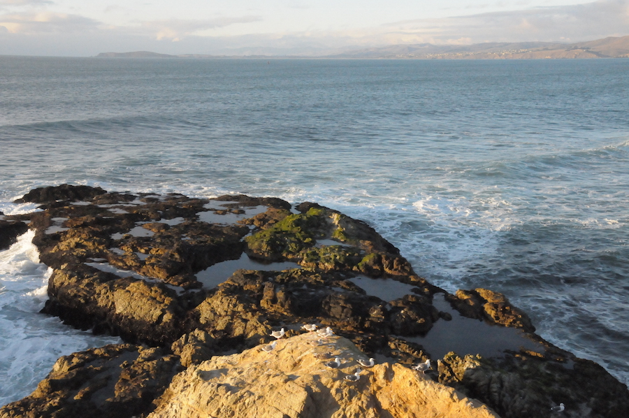 Tip of Tomales Point
